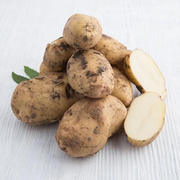 Картофель молодой белый